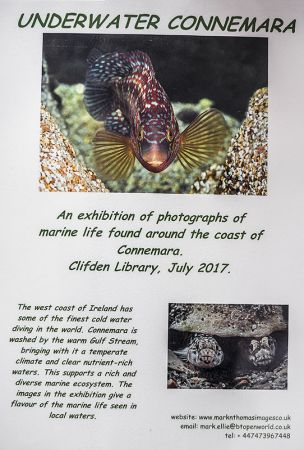 Exhibition July 2017